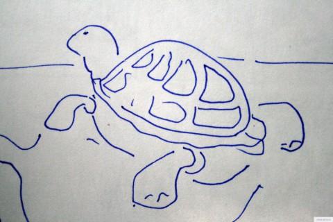 Черепаха рисунок/фото